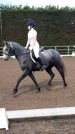 Dressage at parklands