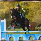 BE90 Show jumping
