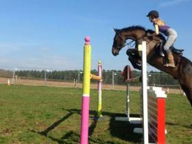 Jumbo Brook 16.1hh 5yrs old
