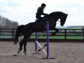 Karandazzler 17hh 6yrs old
