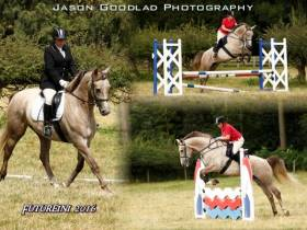 Futurini 16.3hh 6yrs old